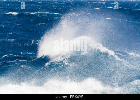 waves of the Southern Ocean at South Georgia in the Subantarctic, Suedgeorgien - Stock Photo