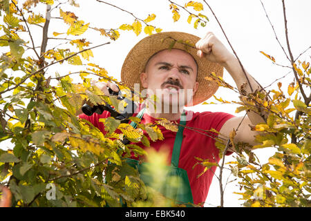 angry gardener offending over the hedge - Stock Photo