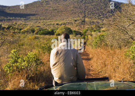 man sitting on bonnet during a safari, South Africa - Stock Photo