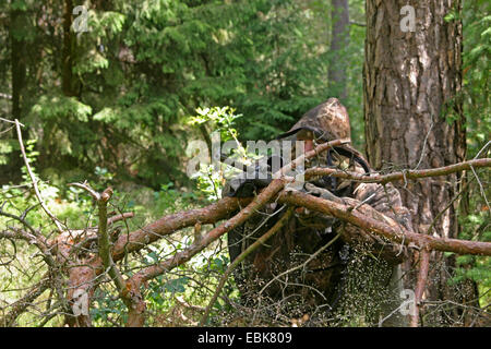camouflaged huntsman in forest, Germany, Lower Saxony - Stock Photo