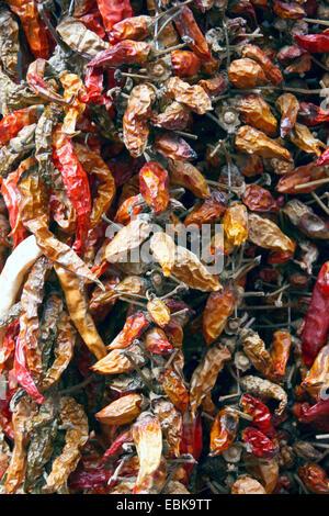 chili pepper, paprika (Capsicum annuum), dried chili peppers - Stock Photo