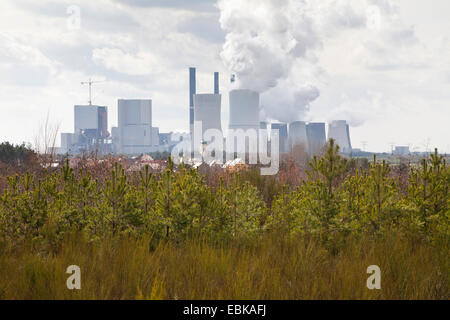 little village Nochten in front of brown coal-fired power plant Boxberg with pine young forest in the forground, - Stock Photo