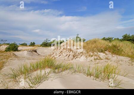 dunes at the Baltic Sea, Germany, Mecklenburg-Western Pomerania, Nationalpark Vorpommersche Boddenlandschaft - Stock Photo