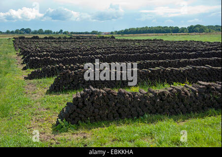 peat cutting, stacked sods of peat, Germany, Lower Saxony, Wilhelmsfehn - Stock Photo