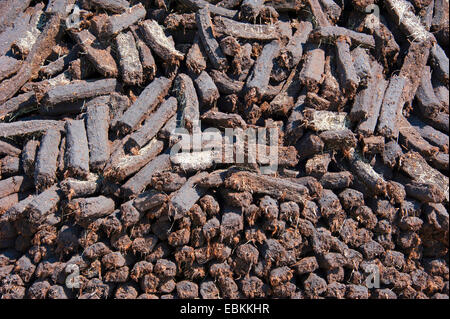 peat cutting, heap with sods of peat, Germany, Lower Saxony, Wilhelmsfehn - Stock Photo