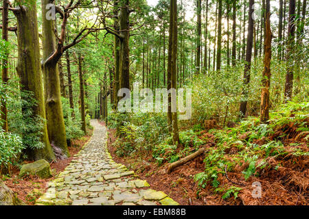 Kumano Kodo at Daimon-zaka, a sacred trail designated as a UNESCO World Heritage site in Nachi, Wakayama, Japan. - Stock Photo