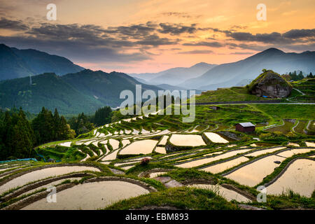 Rice Paddies at Maruyama Senmaida in Kumano, Japan. - Stock Photo