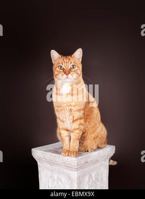 Ginger cat sitting on a column. - Stock Photo