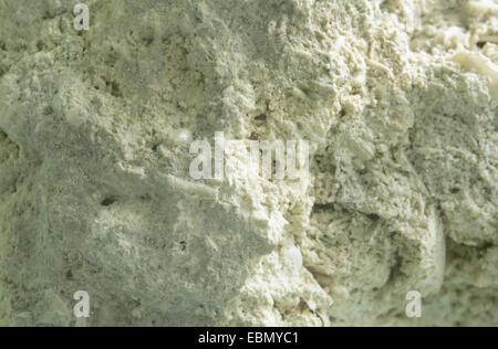 limestone from Bryozoa, Germany - Stock Photo