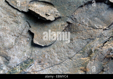 brown coal, Germany, Hesse, Hoher Meissner - Stock Photo