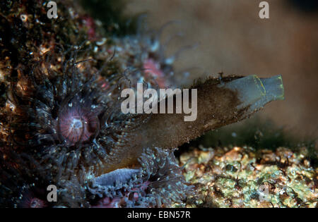 Sea Vase Stock Photo 283266437 Alamy
