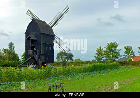 post mill in the open-air museum Klockenhagen, Germany, Mecklenburg-Western Pomerania, Klockenhagen - Stock Photo