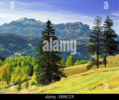 alpine pasture and mountain scenery with larches in autumn, view onto Schlern group, Italy, South Tyrol, Dolomiten - Stock Photo