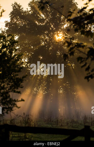 tree in morning sun with crepuscular rays, Germany, Schleswig-Holsten, Luetjensee - Stock Photo