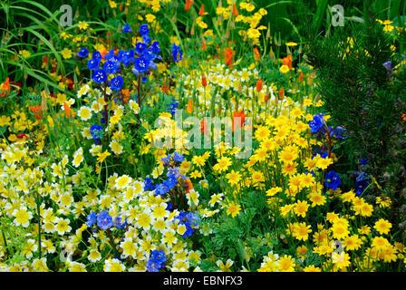 Annual wildflower border, Fetzer Vineyards' Sustainable Winery Show Garden, RHS Chelsea Flower Show 2007, London, - Stock Photo