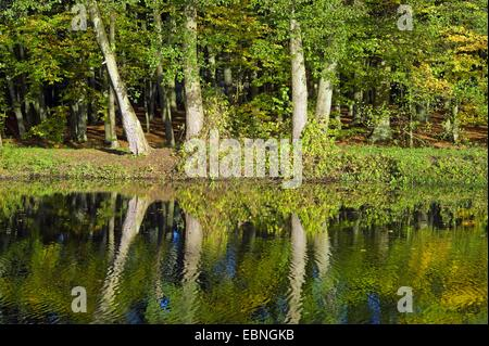 row of trees mirroring in the water of the ditch at castle Schoenebeck, Bremen Vegesack, Germany, Bremen - Stock Photo
