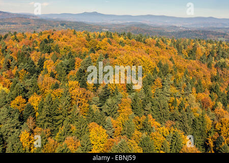 aerial view to spruce and beech forest in autumn, Germany, Bavaria, Bavarian Forest National Park - Stock Photo