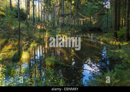 pond in spruce forest with mirror immage, Germany, Bavaria - Stock Photo