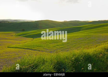 hilly meadows in spring in the erosion landscape of the Crete Senesi, Italy, Tuscany, Monteroni d' Arbia - Stock Photo