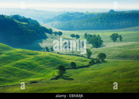 hilly forest and meadow landscape in morning light in spring, Italy, Tuscany, Siena - Stock Photo