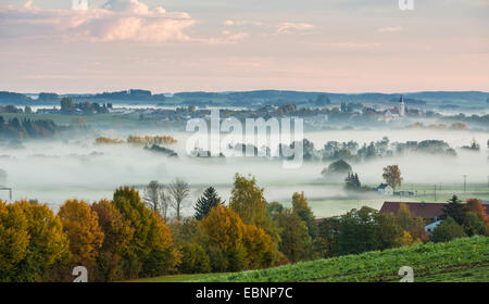 forest and meadows in early morning fog, Germany, Bavaria, Isental, Dorfen - Stock Photo