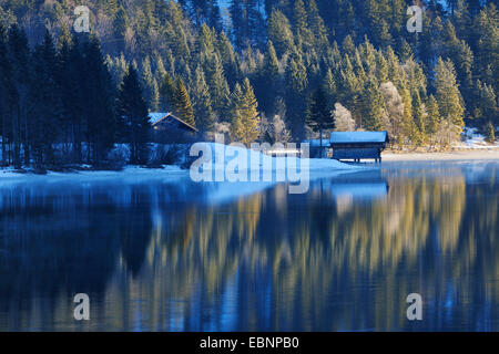 forest reflected in Lake Plansee in winter, Austria, Tyrol - Stock Photo