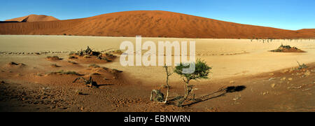 camel thorn, giraffe thorn (Acacia erioloba), The dead trees valley in desert Sossusvlei, Namibia, Namib Naukluft - Stock Photo
