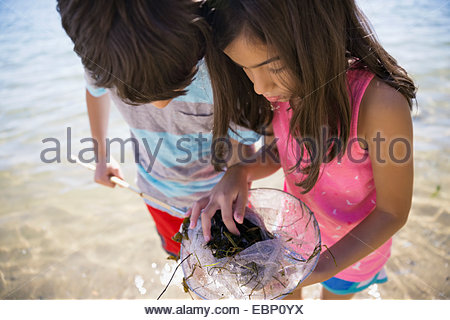 Boy and girl clam digging on beach - Stock Photo