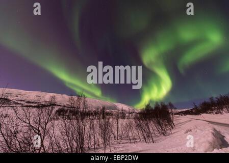 aurora eddy in winter landscape, Norway, Troms, Finnvikdalen - Stock Photo