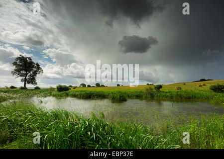 rain clouds over inshore waters with reed belt in field landscape, Germany, Mecklenburg-Western Pomerania, Hiddensee - Stock Photo