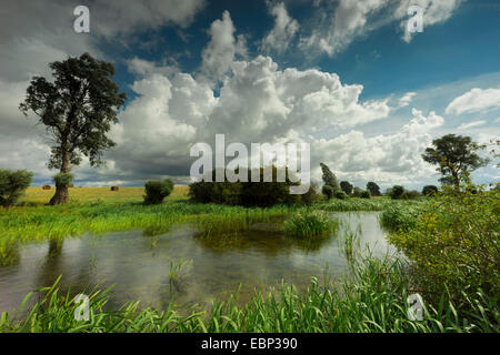 clouds over inshore waters with reed belt in field landscape, Germany, Mecklenburg-Western Pomerania, Hiddensee - Stock Photo