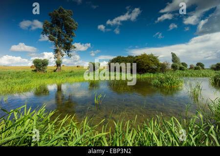 pond in field landscape, Germany, Mecklenburg-Western Pomerania, Hiddensee - Stock Photo