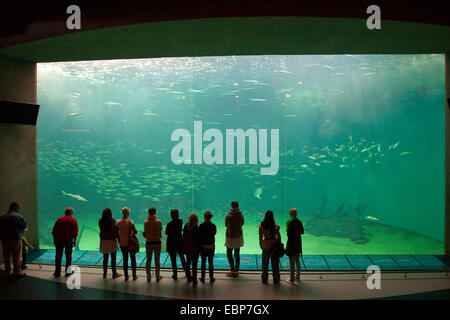 visitors looking to huge fish tank - Stock Photo