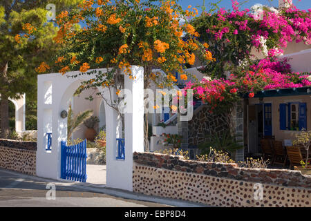 Akrotiri, Santorini, South Aegean, Greece. Village dwelling covered in colourful bougainvillea. - Stock Photo