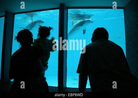 Visitors look at dolphins at Nuremberg Zoo in Bavaria, Germany. - Stock Photo