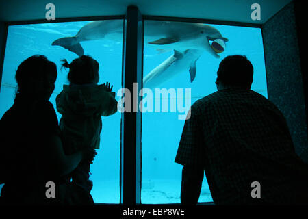 Visitors look as dolphins play with a ball at Nuremberg Zoo in Bavaria, Germany. - Stock Photo