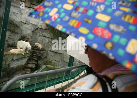 Visitors under umbrellas looks at a polar bear (Ursus maritimus) with two cubs at Schonbrunn Zoo in Vienna, Austria. - Stock Photo