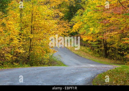 Road curving though fall colors in woods in Chestnut Ridge Park in New York State - Stock Photo