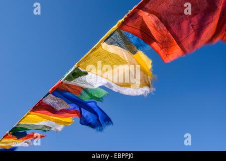 Prayer flags at Namgyal Tsemo Monastery in Leh, Ladakh, Himalayas, India, Asia