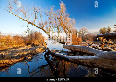 fallen tree at the Ruhr river bank in autumn, Germany, North Rhine-Westphalia, Ruhr Area, Wetter/Ruhr - Stock Photo