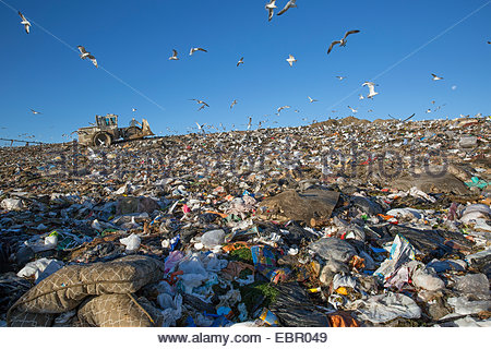 Seagulls flying over garbage dump - Stock Photo