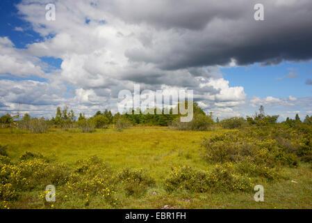 approaching thunderstorm over the nature reserve Moeckelmossen on Oeland, Sweden, Oeland, Stora Alvaret - Stock Photo