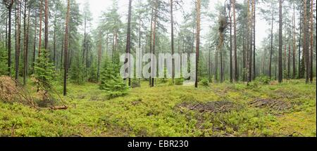 Panoramic landscape of a forest in Upper Palatinate, Germany, Bavaria - Stock Photo