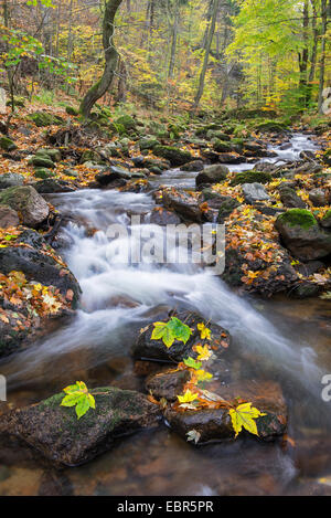 Ilse valley in the Harz in autumn, Germany, Saxony-Anhalt, Harz National Park - Stock Photo