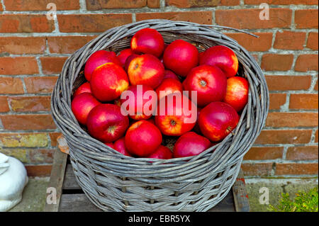 apple (Malus domestica), red apples in a basket for selling in the Altes Land county Stade, Germany, Lower Saxony - Stock Photo