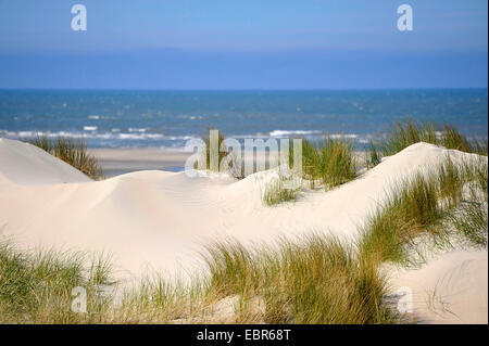 dunes on Langeoog, Germany, Lower Saxony, Langeoog - Stock Photo
