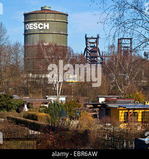 allotment gardens in front of Gasometer and blast furnace Phoenix West, Germany, North Rhine-Westphalia, Ruhr Area, - Stock Photo