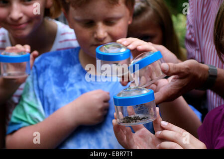 children lookiing at insects in bug viewers, Germany - Stock Photo