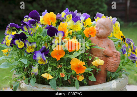 Pansy, Pansy Violet (Viola x wittrockiana, Viola wittrockiana, Viola hybrida), pansies with garden sculpture, Germany - Stock Photo