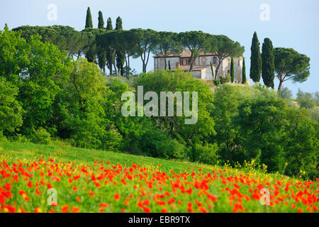 Tuscany Countryside in Spring, Val d' Orcia, Castiglione d' Orcia, Italy, Tuscany - Stock Photo